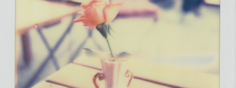 Polaroid Rose